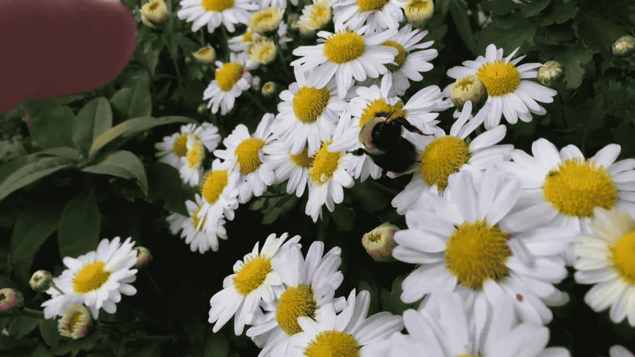 aww, bumble bee, cute, high five, Bumble Bee High Five GIFs