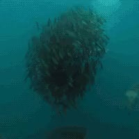Watch underwater GIF on Gfycat. Discover more related GIFs on Gfycat