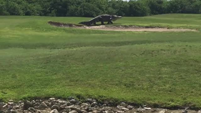 Watch and share Crocodile GIFs and Florida GIFs by SKEZ520 on Gfycat