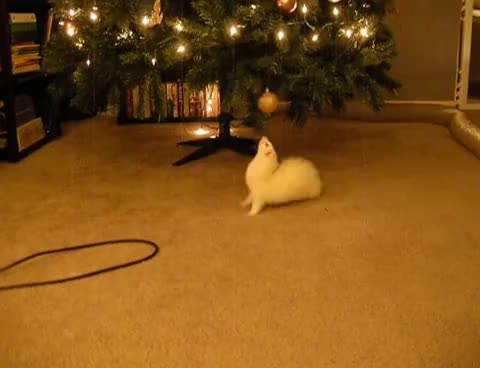 ferret, ferretstealschristmas GIFs