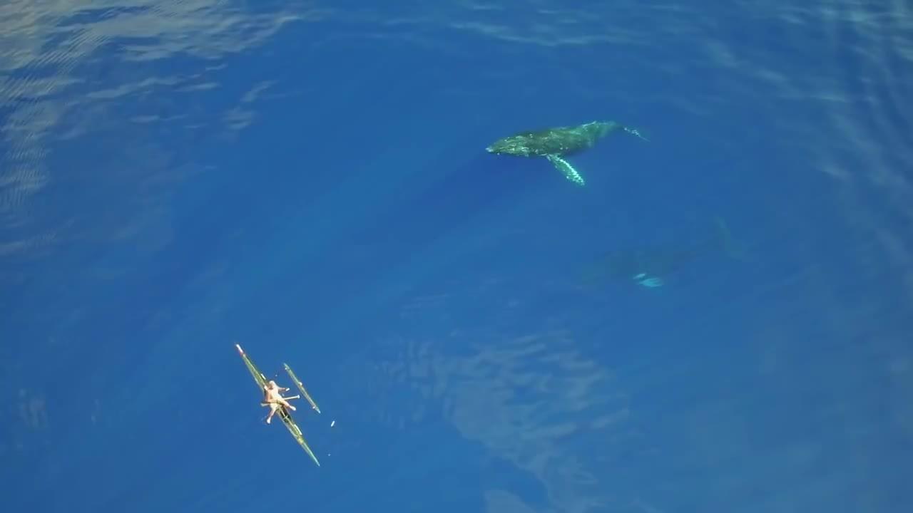 hawaii, humpback whales, thalassophobia, humpback whales in hawaii GIFs