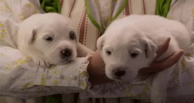 Watch and share 1. Newborn Puppies! GIFs on Gfycat