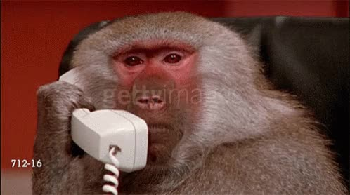 Watch and share Monkey Laptop GIFs on Gfycat