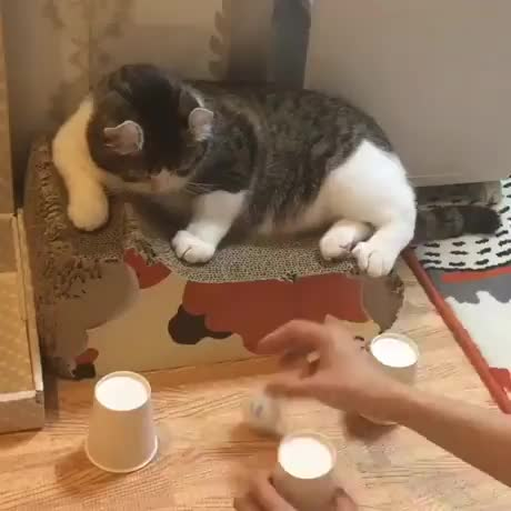 Ball and cup trick