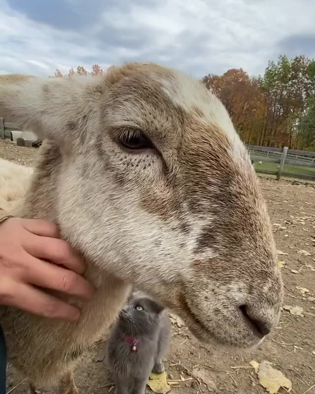 Watch and share Safe Haven Funny Farm GIFs by b12ftw on Gfycat