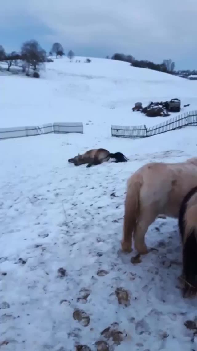 Watch and share Horses Can Be 1,100 Pound Dogs. They Can Also Be 1,100 Pound Assholes. GIFs by HoodieDog on Gfycat