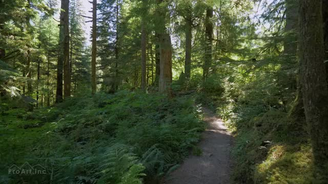 Watch and share Walk In The Woods GIFs and Snoqualmie Region GIFs on Gfycat