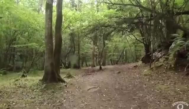 Watch and share Relaxing Walk In The Forest, First Person View GIFs on Gfycat