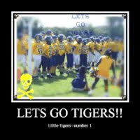 Watch and share Little Tigers GIFs on Gfycat