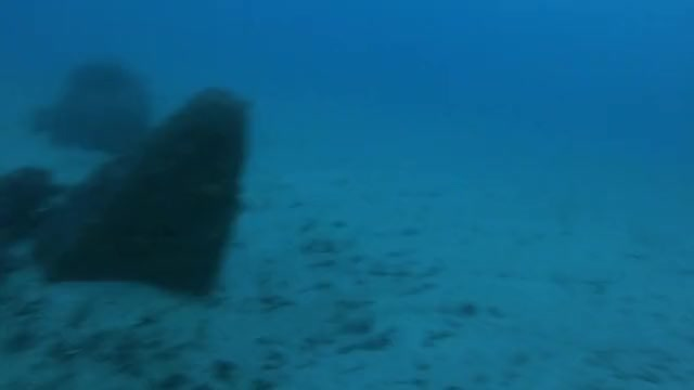 Watch Gray Whale McAbee Pinnacle Monterey Bay GIF by @brlten on Gfycat. Discover more graywhale, monterey, montereybay, nature GIFs on Gfycat