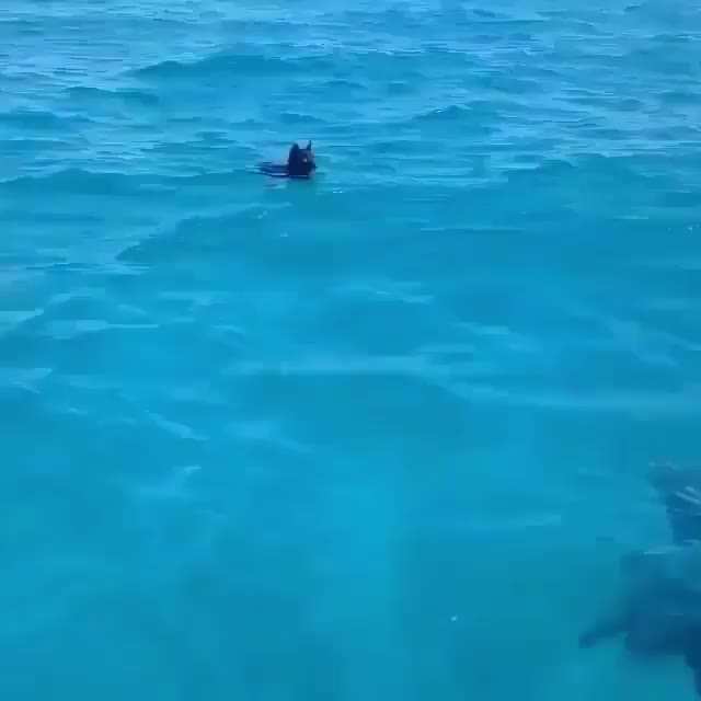 Watch and share Ocean GIFs by Yaybeach on Gfycat