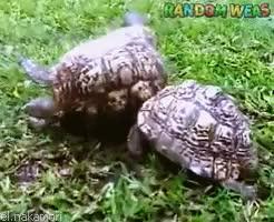 Watch Random Weas GIF on Gfycat. Discover more Amistad, Animales, Animals, Ayuda, Friendship, Help, Reptiles, Tortoise, Tortugas, el.nakamori GIFs on Gfycat