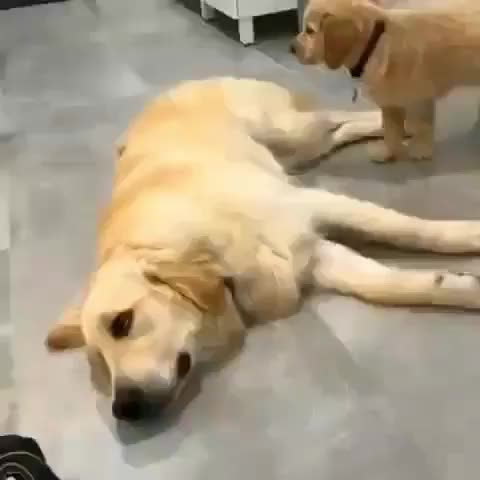 Watch and share Puppy GIFs and Dog GIFs by mayaxs on Gfycat