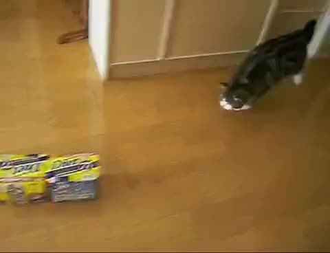 Watch maru GIF on Gfycat. Discover more Japan, Maru, box, cat GIFs on Gfycat