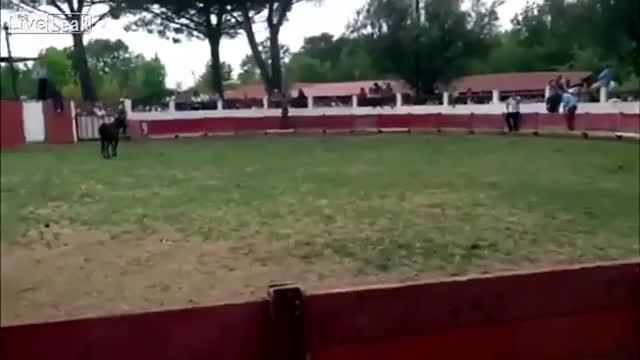 Watch Guy tries to quick step it from one side of a bull ring to the other. [x-post /r/HadToHurt] (reddit) GIF on Gfycat. Discover more instant_regret GIFs on Gfycat