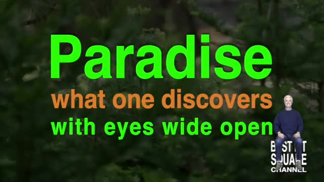 Watch and share Paradise GIFs and Yosemite GIFs by Manuel T. Ortega on Gfycat