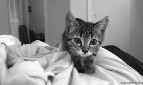 Watch and share Добавлена: Фев. 15, 2016   GIFs on Gfycat