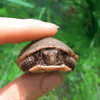 Hilarious Turtle GIFs
