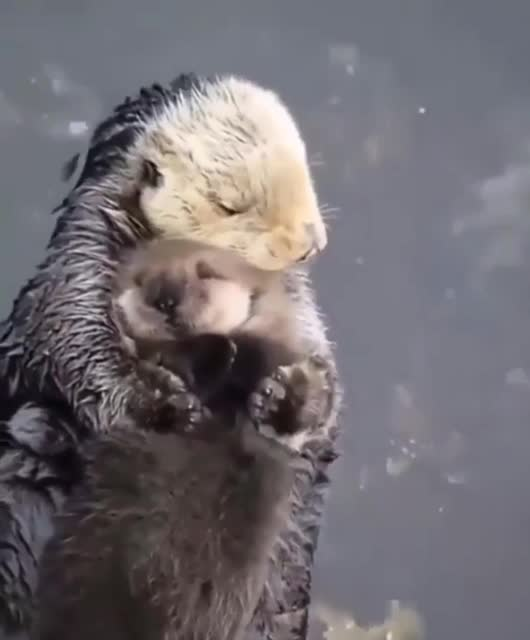 Watch and share Otter GIFs and Cute GIFs by Ancalagon on Gfycat