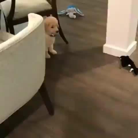 dog, puppy, Pupper practicing their sneak attack GIFs