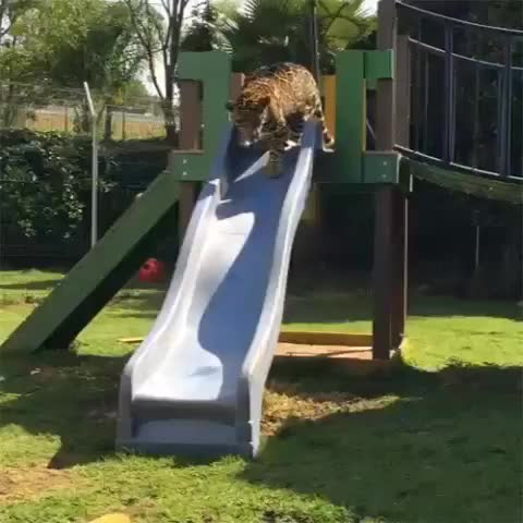Watch and share Bigcatgifs GIFs and Popular GIFs on Gfycat