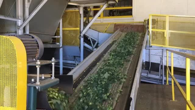 Watch Hop Processing GIF on Gfycat. Discover more beerporn GIFs on Gfycat