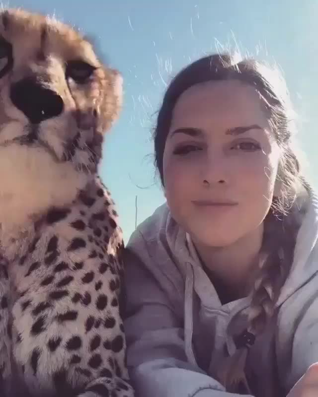 Watch and share A Girl And Her Cheetah (@lisatorajaqueline) GIFs by tothetenthpower on Gfycat