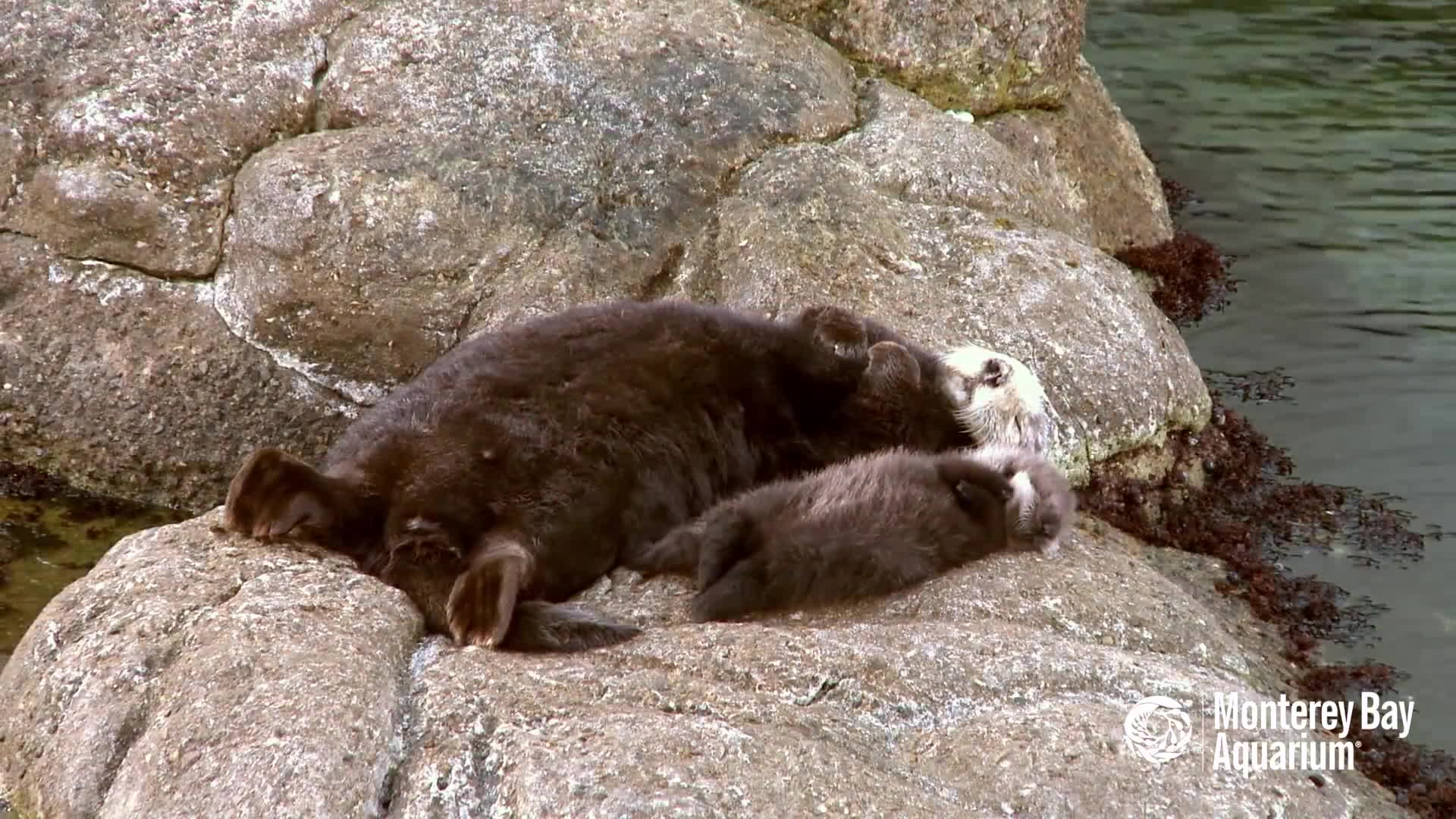 aww, baby, sea otter, Otters sunbathing GIFs
