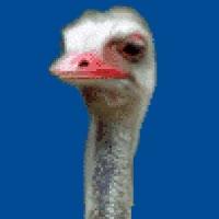 Watch birdbrain ostrich bird brain blah bla animated gif sarcasm yack yuk gobble nonsense insult GIF on Gfycat. Discover more related GIFs on Gfycat