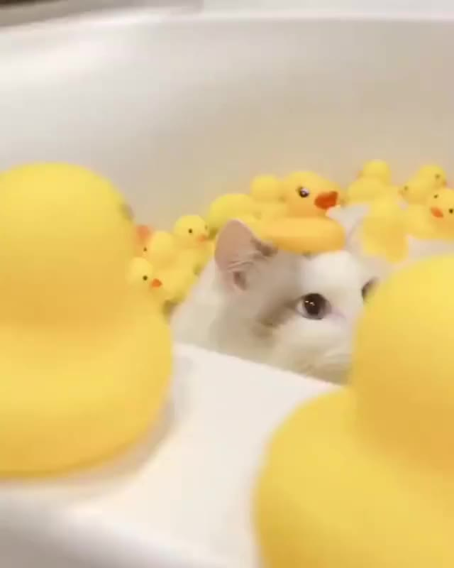 Watch and share Bath GIFs and Cat GIFs on Gfycat