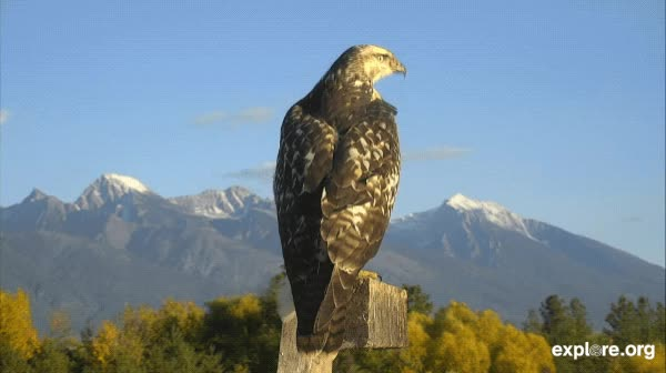 Watch this bird GIF by Explore.org (@exploreorg) on Gfycat. Discover more related GIFs on Gfycat