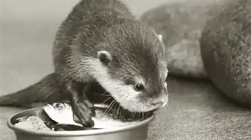 Watch and share Otters GIFs on Gfycat