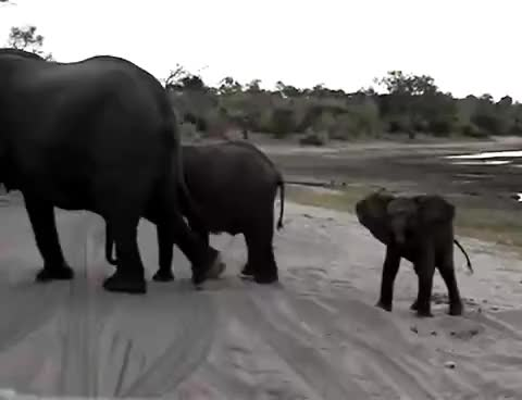 Watch this elephant GIF on Gfycat. Discover more Africa, africa, animal, animals, baby, cute, elephant, funny, scared, sneezes, zoo GIFs on Gfycat
