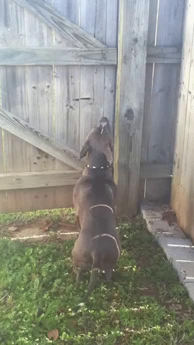 AnimalTextGifs, StoppedWorking, therewasanattempt, [Request]Dog chasing cat (reddit) GIFs