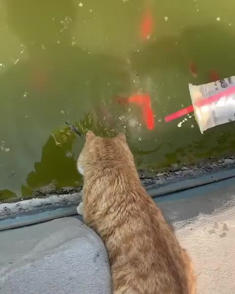 cat, fish, fishing, Catching up with a friend GIFs
