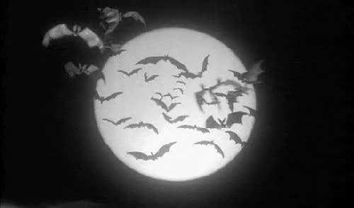 Watch this bat GIF on Gfycat. Discover more animal, bat, zoo animal GIFs on Gfycat