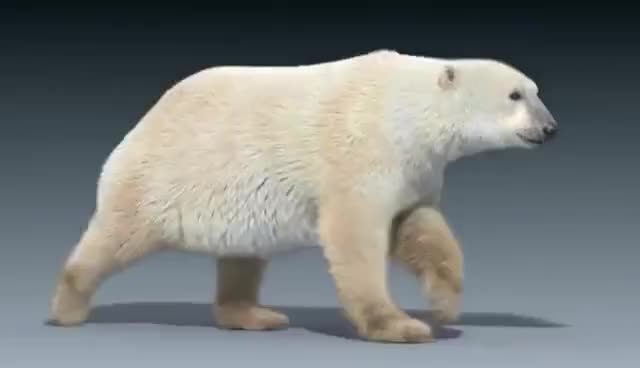 Watch this polar bear GIF on Gfycat. Discover more animals, bear, bears, cute, polar bear GIFs on Gfycat
