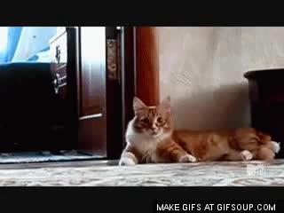 nope nope nope cat GIFs