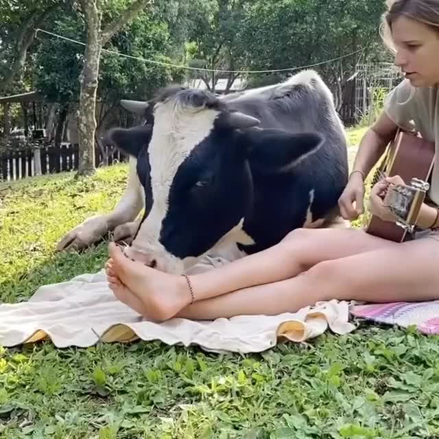Watch and share Animal Sanctuary GIFs and Playing Guitar GIFs by lnfinity on Gfycat