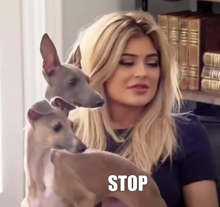 Dogs, Kardashians, Kylie Jenner, Shut up, Stop, STOP GIFs