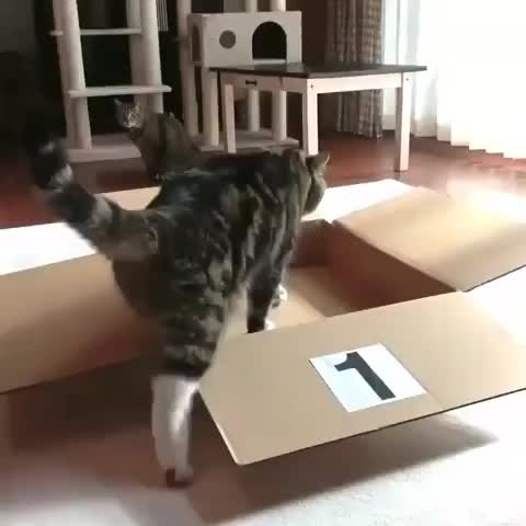 cat, How high this cat can jump GIFs