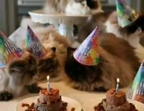 birthday, kittens, kittens. GIFs
