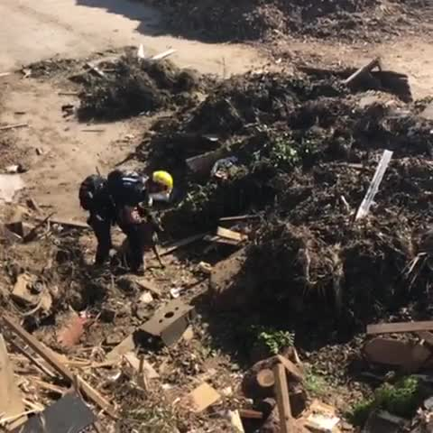 Watch and share Here's A Video Of K9 Sonny From Our Training Last Week At A Green Waste/recycle Yard. So Many Sounds And Smells To Work Through But All The  GIFs by PM_ME_STEAM_K3YS on Gfycat