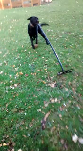 Watch this autumn GIF on Gfycat. Discover more autumn, cute, dog, fall, garden, leaf, leaves GIFs on Gfycat