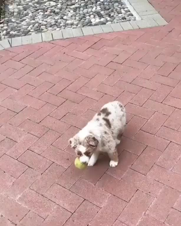 Watch Careful Buddy.. Be safe.. GIF by Sanghan Baek (@asdf123344) on Gfycat. Discover more NesytovShuner, tennis GIFs on Gfycat