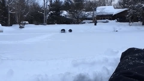 aww, Pups trucking through deep snow GIFs