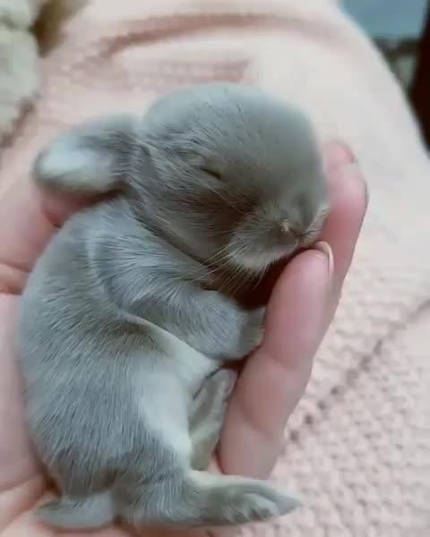 bunny, rabbit, The sleepiest baby bunny GIFs