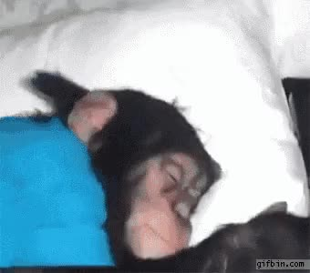 Watch this sleep GIF by The GIF Forge (@leahstark) on Gfycat. Discover more sleep GIFs on Gfycat