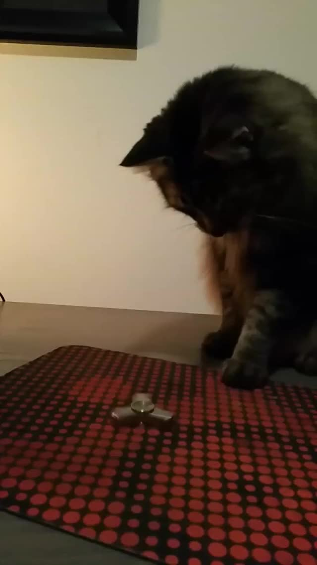 Watch Kitty Fidget Spinning GIF on Gfycat. Discover more catgifs GIFs on Gfycat