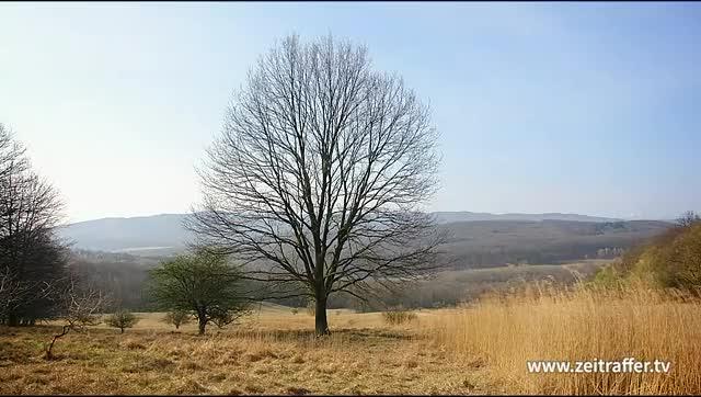 Watch and share Zeitraffer Jahrszeiten Maerchen Baum Vier Jahreszeiten Trim2 GIFs on Gfycat